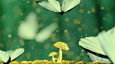 mushroom_link