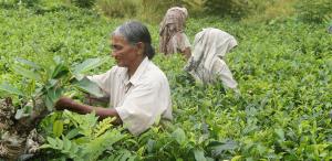 Organic Farming - Sukrit Ayurveda